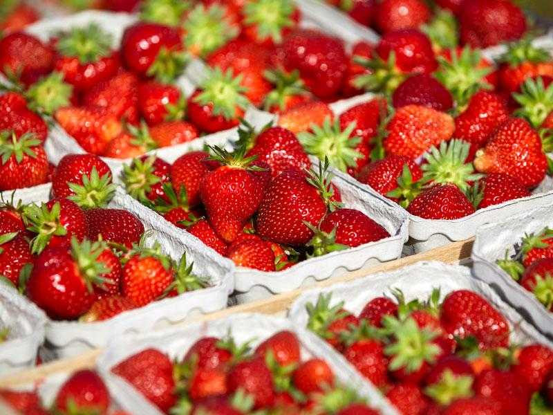Steegmüller - Erdbeeren