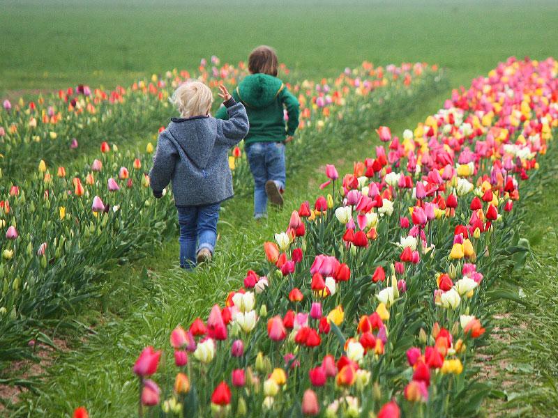 Blumen selbst pflücken - Steegmüller